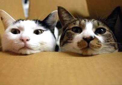 2 cats on a cardboard box